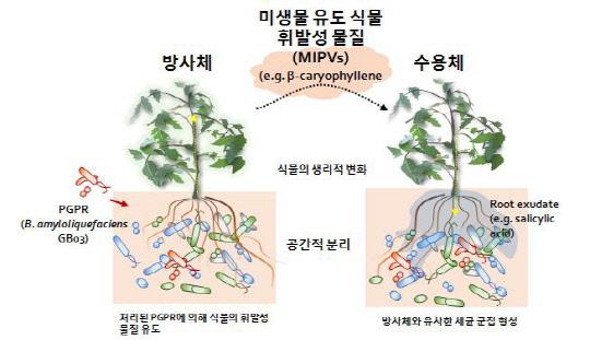 """""""식물도 언택트로 대화한다""""…접촉 없이 유익균과 냄새로 영향 미쳐"""